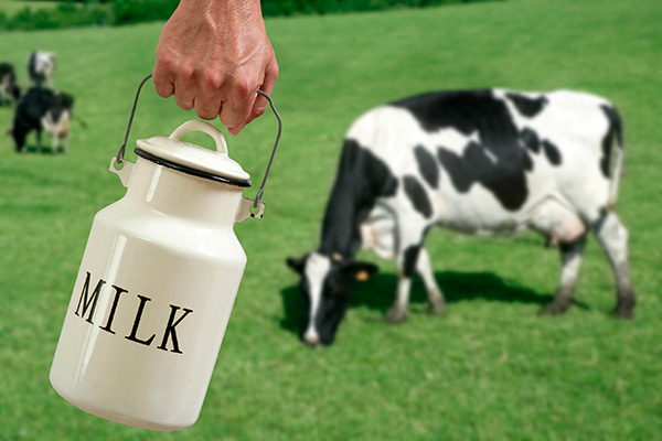 Grass fed or organic milk? What's better - find the answer here as well as what we serve our own families