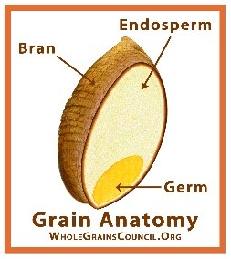 The edible portions of whole grains